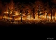 Forest fire wallpaper the wajas wiki forest fire wallpaper voltagebd Gallery